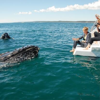 Hervey Bay Whale Watching Tours - In-water Hydraphone - Swim with Whales