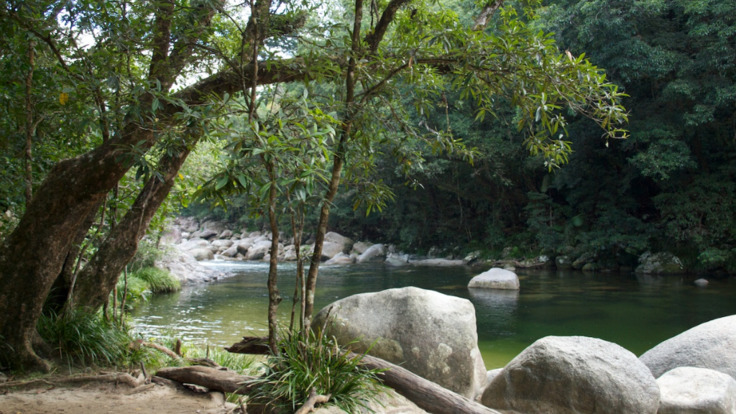 Mossman Gorge Tour, Tropical North Queensland