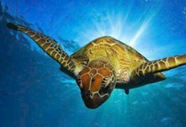Meet friendly sea turtles on the Great Barrier Reef