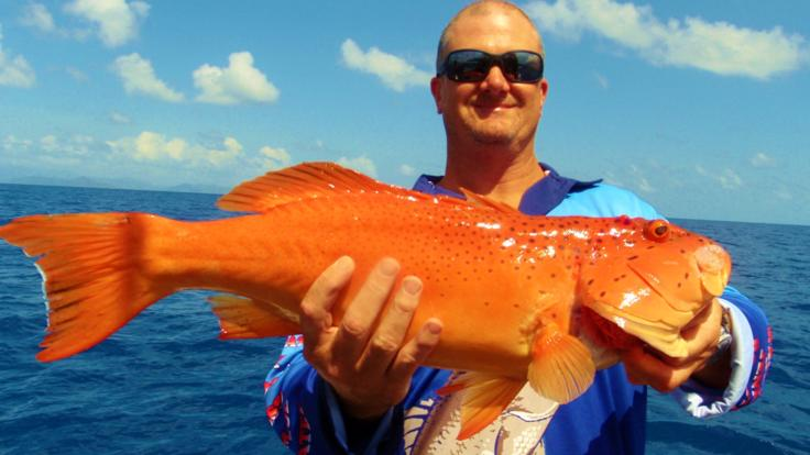 Cairns Fishing - Coral Trout
