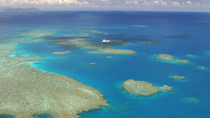 See the reef from a helicopter transfer to the fishing boat