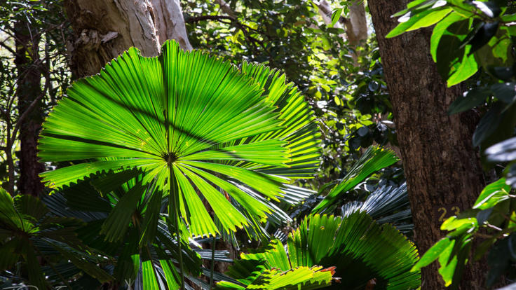Cooktown Botanical Gardens Included In Your Cairns to Cooktown Trip