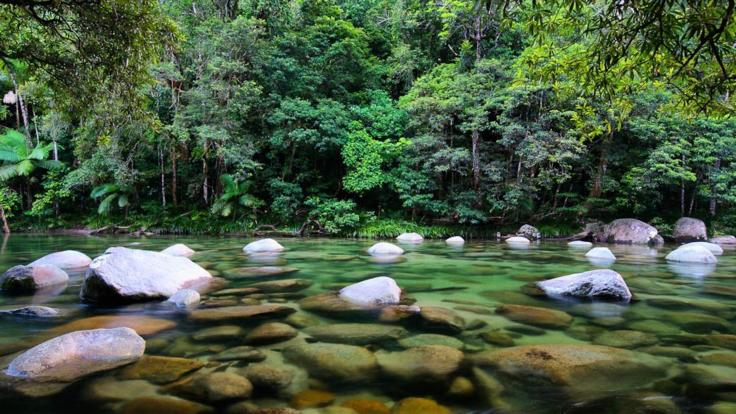 1 Day Cairns To Cooktown Trip | Daintree Rainforest
