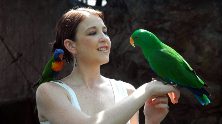 Hold the Eclectus parrots in Cairns