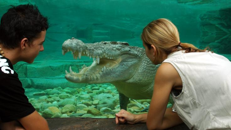 Get face to face with a crocodile in Cairns City