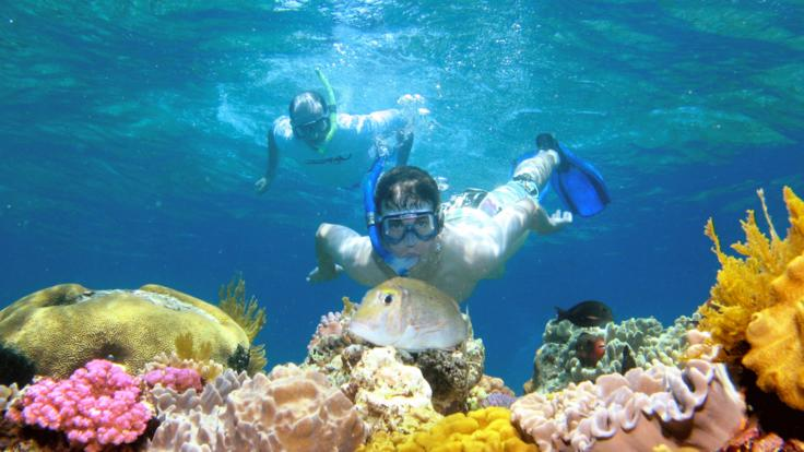 Guided snorkel tours on the Great Barrier Reef, from Port Douglas