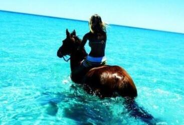 Horse Rides on the Beach - Cape Tribulation