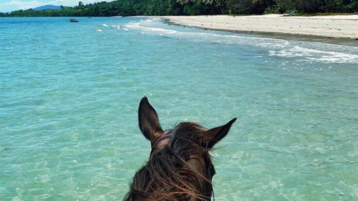 Cape Tribulation Horse Rides - Swim With Horses on the Beach