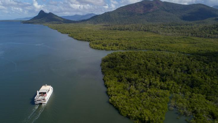 Our Great Barrier Reef cruises explore wetlands along the coastline