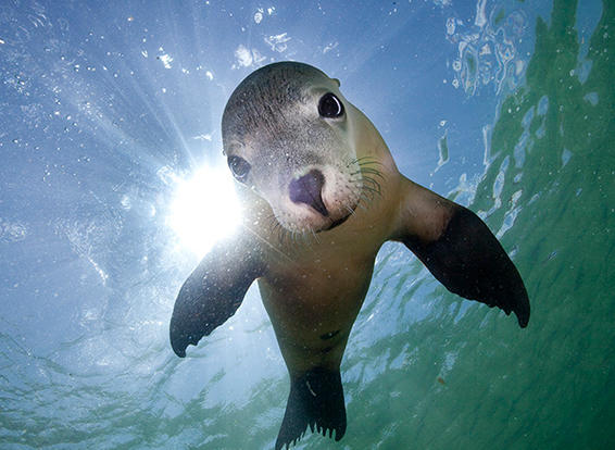 Houtman Abrolhos - Watch the sea lions as they play in the waters or bask in the sun at Peos Island.