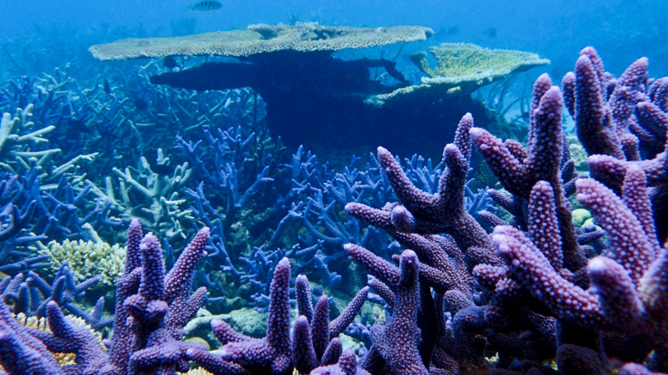 Explore the coral gardens, Great Barrier Reef