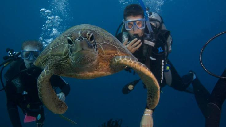 Diving with the turtles, Great Barrier Reef