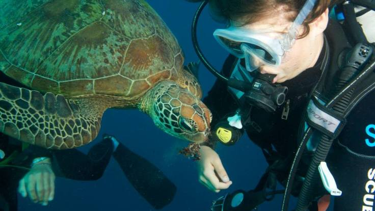 Liveaboard Dive Boats Cairns - Dive with the turtles, Great Barrier Reef