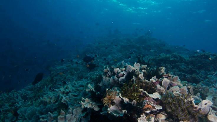 Coral Gardens, Great Barrier Reef