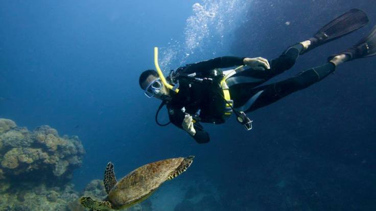Cairns Charter Yachts - Dive with the turtles, Great Barrier Reef