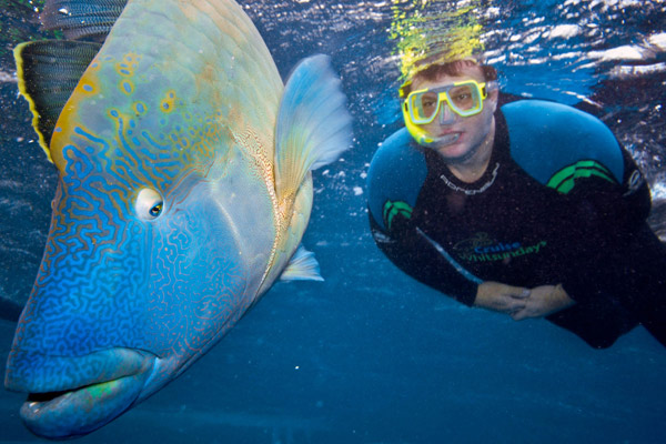 Snorkel with a Moari Wrasse on the Great Barrier Reef