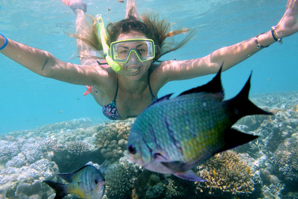 Encounter diverse marine life as you snorkel the Great Barrier Reef