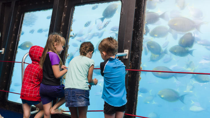 Experience the Great Barrier Reef from the underwater observatory on the Pontoon