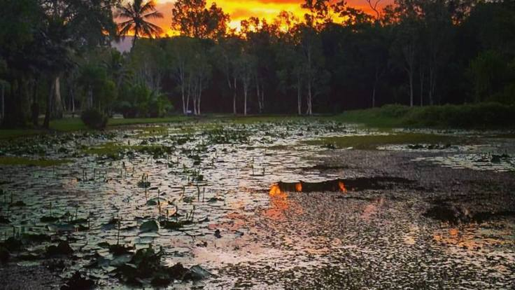 Picturesque wetlands and scenery on your Cairns bike riding tour
