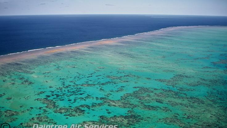 Cairns scenic flights - Aerial view see the reef from above the water