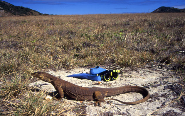 You are sure to spot some lizards on Lizard Island