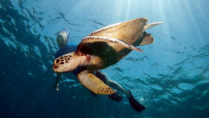 Lizard Island is a great place to spot sea turtles