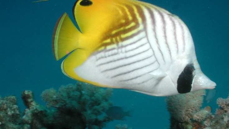 See amazing fish on your Outer Reef Dive course