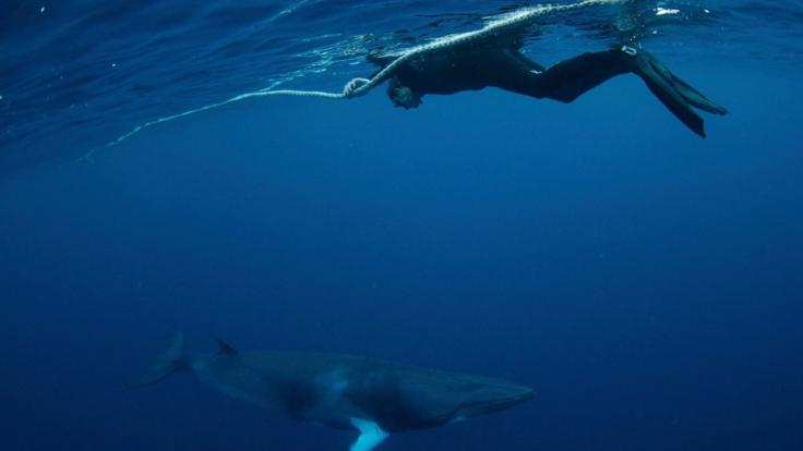 Snorkel & Dive With Minke Whales | Trip Departs From Cairns