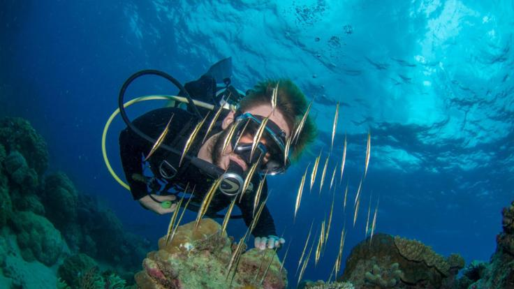 Scuba Diving Liveaboard Trip On The Great Barrier Reef Australia