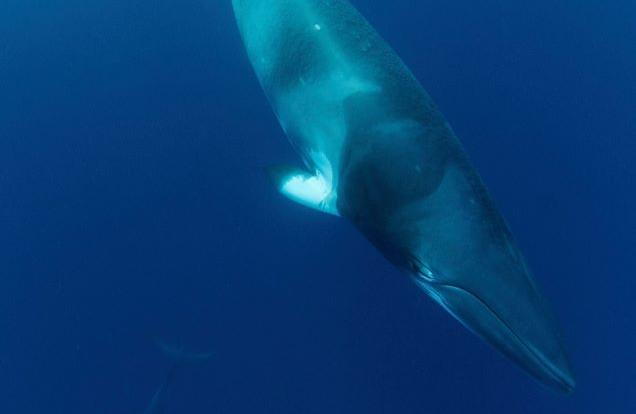 Minke Whale Expedition From Cairns To The Great Barrier Reef