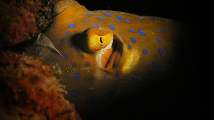Night diving on the Great Barrier Reef in Australia