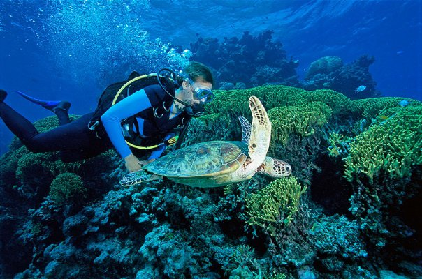 dive with turtles on the great barrier reef in Australia