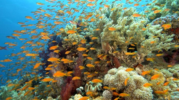 Tropical fish at the amazing reef sites