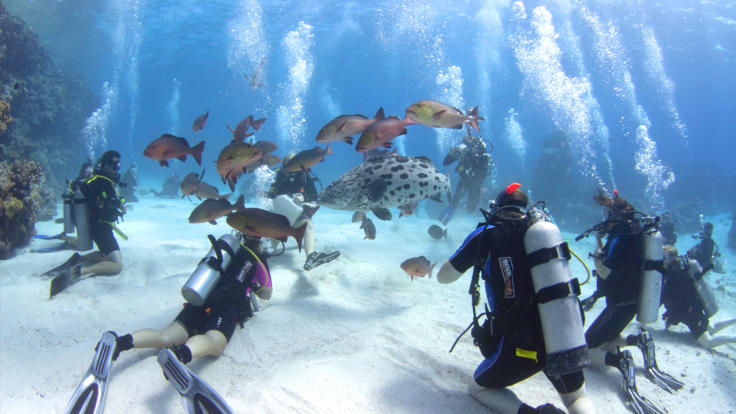 Get Certified | Learn to Scuba Dive in Cairns Tropical North Queensland