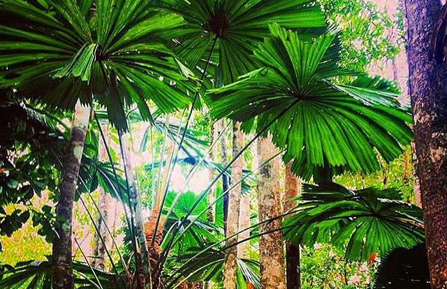 Eco walks with rainforest guides in the Daintree Rainforest