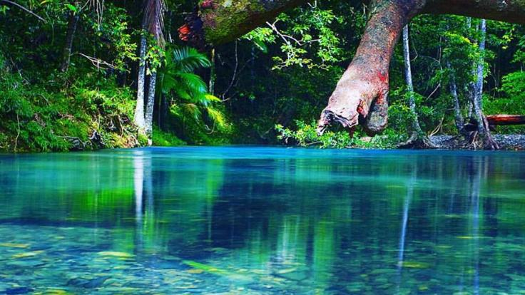 See pristine rivers in the Daintree Rainforest