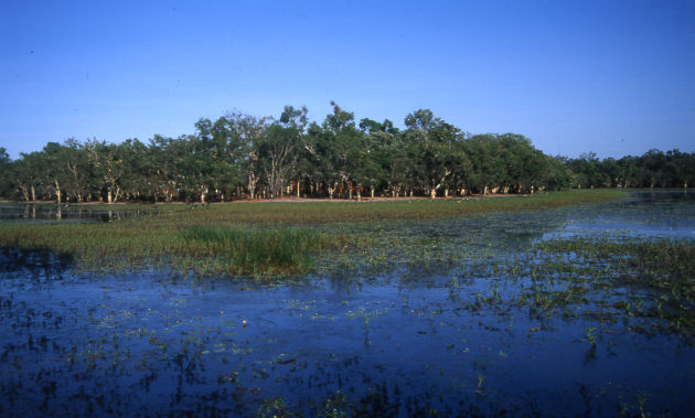Billabong wetlands on our Cape York tour in Queensland, Australia