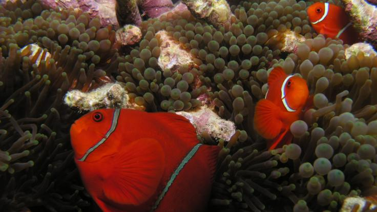 Vibrant Marine Life on the Great Barrier Reef