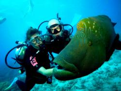 Wally the Maori Wrasse on the Great Barrier Reef in Australia