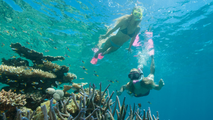 Snorkel with the Sea life and Coral on the Great Barrier Reef in Australia