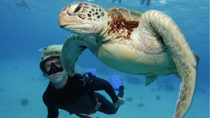 Diving with sea turtles on the Great Barrier Reef in Australia
