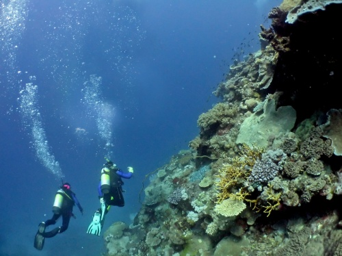 Cairns Reef Tours - Divers on the Great Barrier Reef