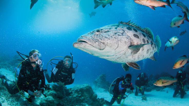 Superyacht Charters Great Barrier Reef - Dive the Cod Hole - TEQ
