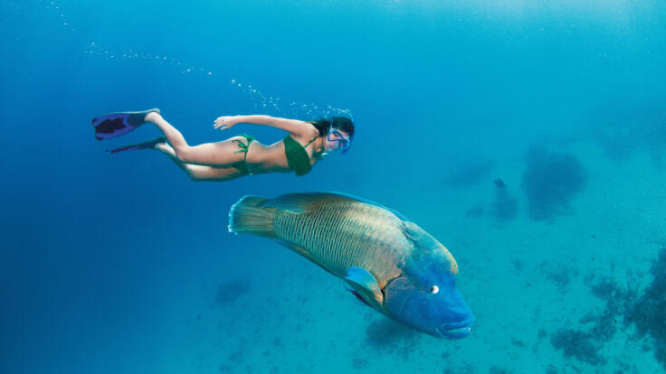 Private Yacht Charters Port Douglas - Snorkel with Giant Maori Wrasse Great Barrier Reef - TEQ