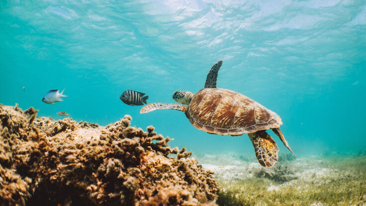 Superyacht Charters Great Barrier Reef - Snorkel with Turtles - TEQ