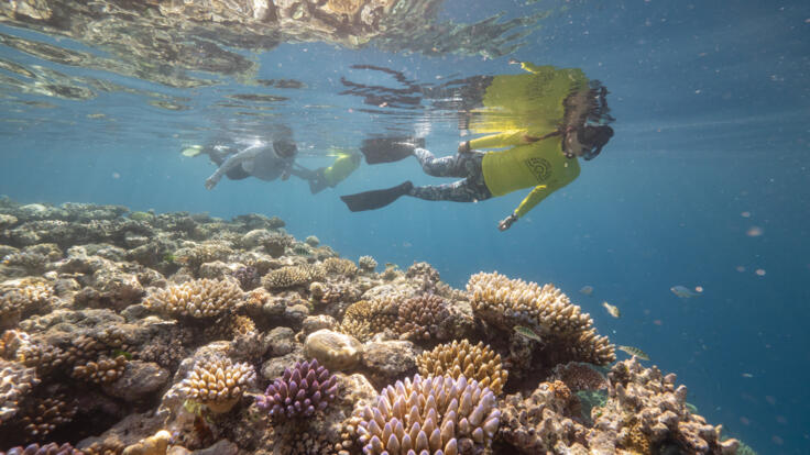 Great Barrier Reef Yacht Charters - Snorkel the Reef - TEQ