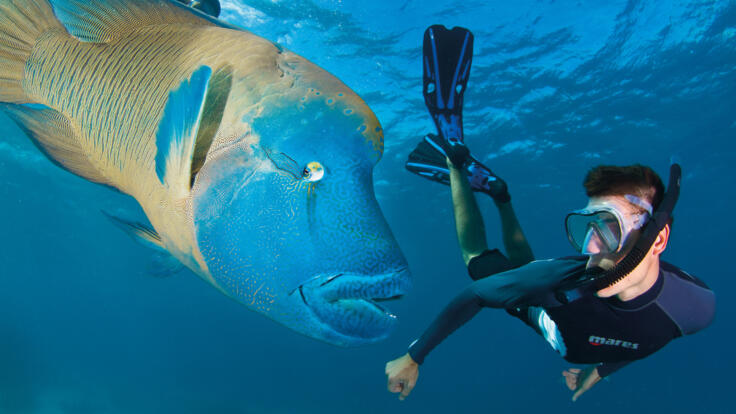 Superyachts Holidays Great Barrier Reef - Snorkel with Moari Wrasse - TEQ