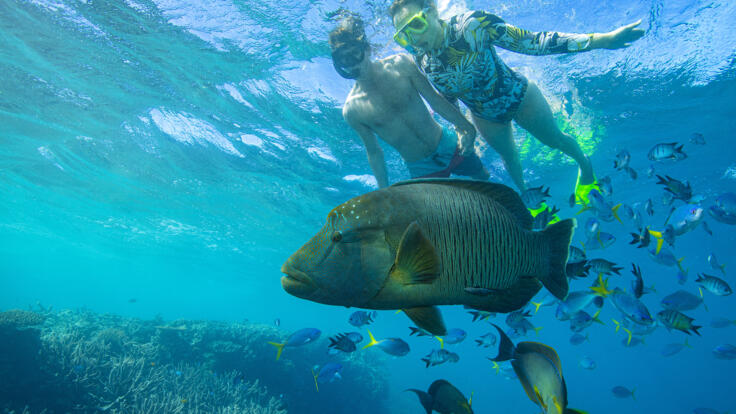 Superyacht Charters Great Barrier Reef - Snorkel with Maori Wrasse - TEQ