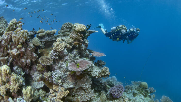 Superyachts Great Barrier Reef - Scuba Dive Ribbon Reefs - TEQ