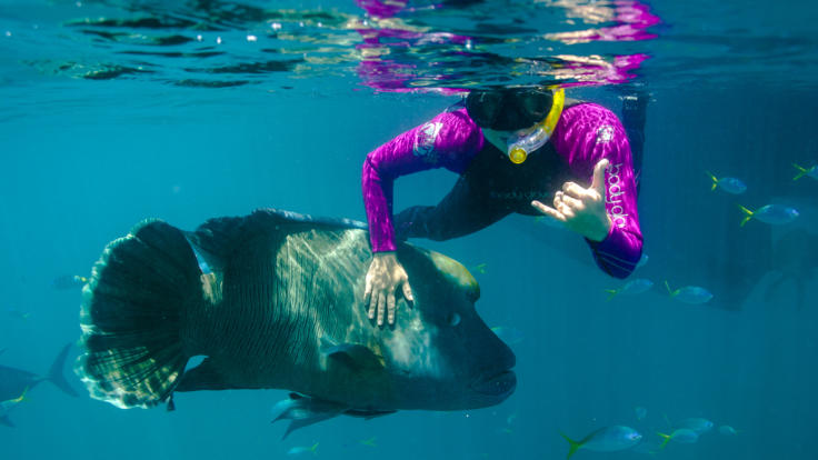 Snorkel with Moari Wrasse